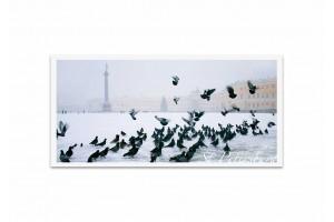 Почтовая открытка фото «Дворцовая площадь»
