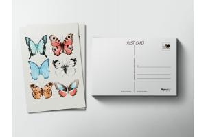 Почтовая открытка «Бабочки»