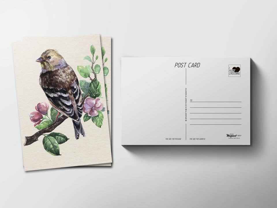 Почтовая открытка «Птица на ветке» для посткроссинга