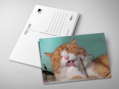 Почтовая открытка «Рыжий котик»