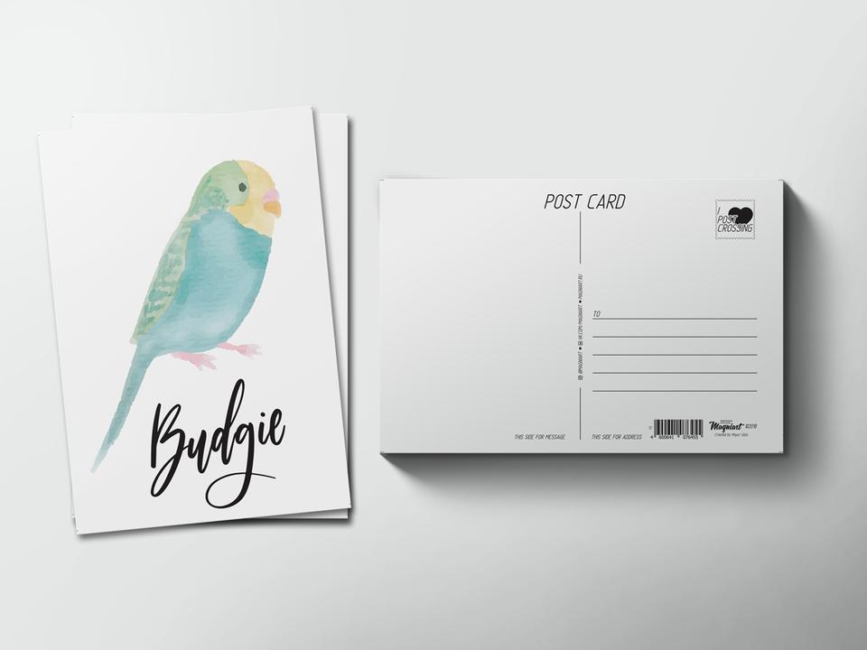 Почтовая открытка из коллекции для посткроссинга «Птица Волнистый попугай»